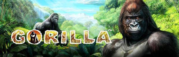 Gorilla im Novoline Casino